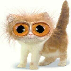 http://www.softcat.ru/images/cat1/cat31.jpg