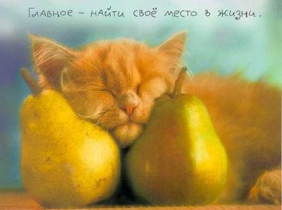 http://www.softcat.ru/images/cat1/cat32.jpg