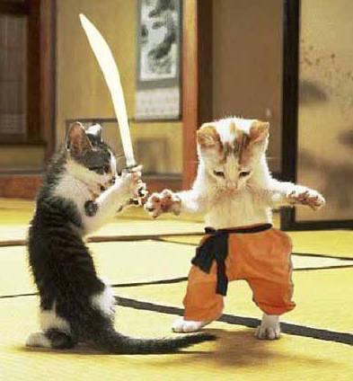 http://www.softcat.ru/images/cat1/cat33.jpg