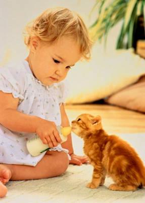 http://www.softcat.ru/images/cat1/cat47.jpg