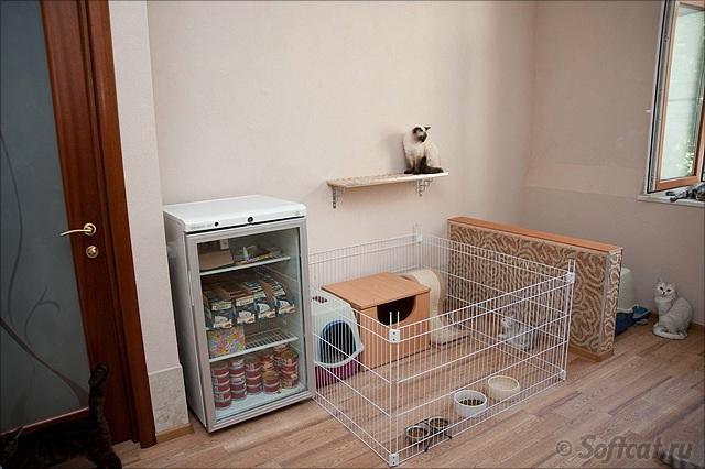 Британские котята, кошки и коты :: питомник softcat.