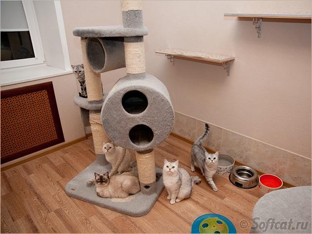 Из чего сделать домики для кошек своими руками
