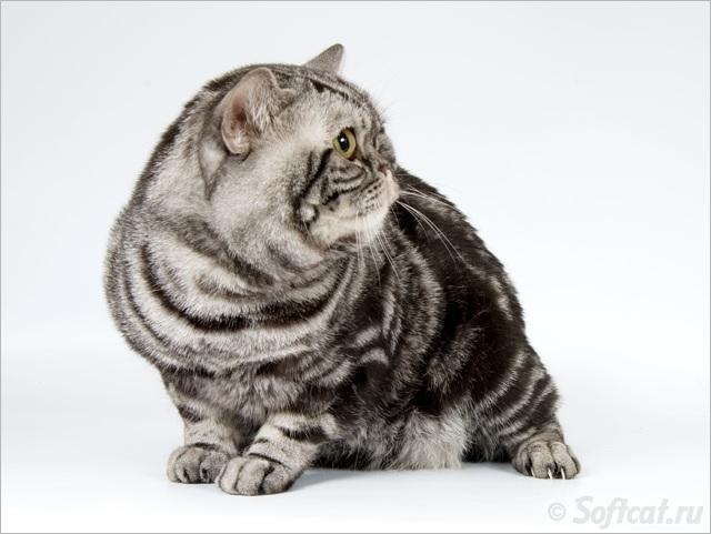 Зеленоглазый кот 6