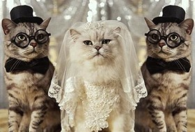 Кошка может родить от нескольких котов