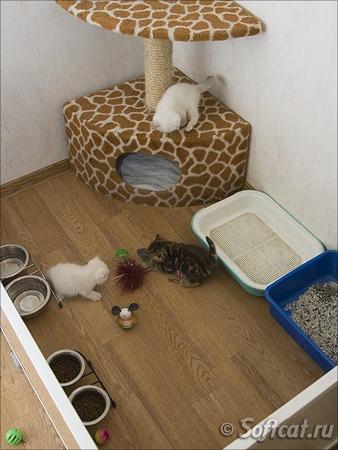 Как сделать котенку домик