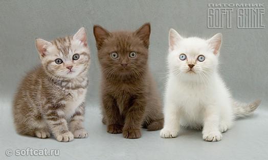 http://www.softcat.ru/images/pedigree/ped3.jpg