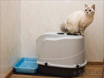 Туалет британского кота